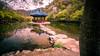 Feather pavilion - South Korea - Travel photography (Giuseppe Milo (www.pixael.com)) Tags: travel path architecture pavillion lake southkorea geotagged nature jeongeup jeollabukdo kr onsale