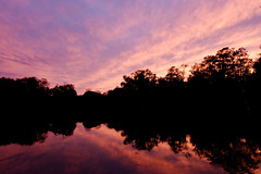 Lake Alice (Anna Peterson) Tags: lakealice universityofflorida bluehour reflections lake sunset pentaxm75150f4