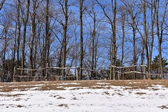 Trees and Fence on a Hill (scan_bank_deposit1) Tags: