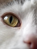 If looks could...... (S.K.1963) Tags: elements cat eye nose olympus omd em1 mkii macro 60mm 28