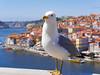 Porto (AlexKapunkt) Tags: portugal porto animal gull