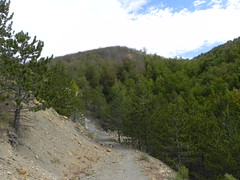 DSCN9728 (Gianluigi Roda / Photographer) Tags: apennines summer latesummer mountains woods trees rocks landscapes crocedeicolli appenninobolognese
