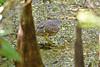 DSC_0642 1 (M. Coppola) Tags: hillsborough florida lettucelakecountypark