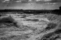 _MG_9698 (L.P.M PHOTOGRAPHY) Tags: birds clouds sand dunes pier wall seascape speyside moray adventure travel 7dmkii canon blackwhite harbour harbor lossiemouth lossie north surge storm stormy beach landscape scotland sea sky ocean water wave