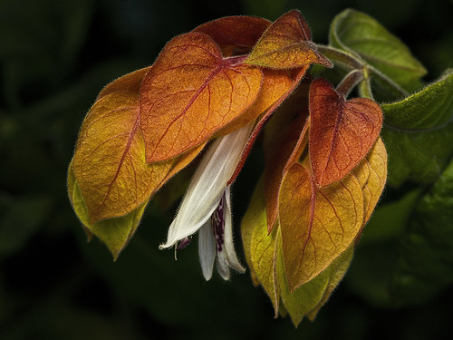 42 - Rainbow Leaves