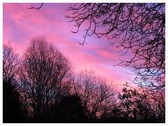 Sunrise (Gert Vanhaecht) Tags: vilvoorde composition nature colour tree light clouds canon colours silhouettes sunrise gertvanhaecht trees winter canonsx720hs garden