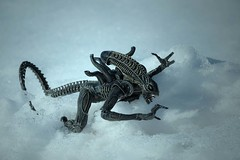 Xenomorph (Jnipco) Tags: xenomorph alien snow monster creature model