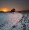 Lone tree (Trojan Wonder) Tags: snow hill sun set downs tree afterglow winter sussex steyning uk canon