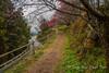 Plum Blossoms in the Mountain Village of Shimoichi, Nara-Ken. (KyotoDreamTrips) Tags: hirohashi hirohashibairin nara plumblossoms shimoichi ume 下市町 広橋梅林 梅花