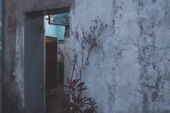 (Oh Saturno) Tags: azul plantas flores platwave fachadas puertas cdmx ciudad urban cold aesthetic street