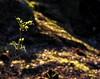 Woodland floor (ronramstew) Tags: forfar angus scotland lochside loch leisure recreation spring 2018 2010s woodland