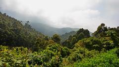 India - Kerala - Munnar - Top Station - 60 (asienman) Tags: india kerala munnar topstation asienmanphotography