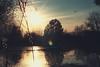 * (sommerpfuetze) Tags: lensflare tree bird sky color evening sun weidenkätzchen water spring grain vorpommern kalkstein gold silhouette überflutung jahreszeiten