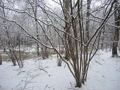 Wintereinbruch im Wesloer Moor Lübeck , NGIDn730073205 (naturgucker.de) Tags: ngidn730073205 naturguckerde wesloermoor cwolfgangkatz