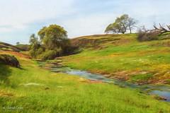 Spring Pastoral (buffdawgus) Tags: northerncalifornia california spring oroville landscape buttecounty idyllic pastoralscene lightroom6 topazsw canonef24105mmf4lisusm canon5dmarkiii tablemountain springtime tabletopmountain