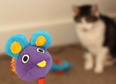 05/04/2018 Mouse (Pat's_photos) Tags: pet cat toy mouse 3652018 flickrlounge weeklytheme 7daysofshooting week35 commonpractices colourfulthursday