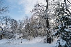 3469 Snowed (JoelZimmer) Tags: 24mmf28 brooklyn newyork nikond750 parkslope prospectpark snowstorm