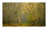 Newton Wood (Amar Sood) Tags: amarsoodphotocom amarsoodphotography nikon d800e landscape landscapes longlenslandscape tamron 7020028 fullframe trees mist fog 169