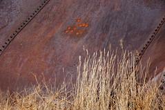 Weeds (nedlugr) Tags: california ca usa carrizoplain carrizoplainnationalmonument sanluisobispocounty grainbin ruraldecay ruralwest rust bulletholes nuts weeds dryasdust drygrass drought omot