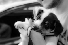 The first (LynxDaemon) Tags: puppy dog experiment saopaulo blackwhite black white grey street pet cute