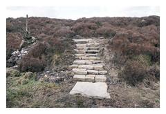 . (-klik-) Tags: stepstoheather heather moorland