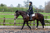 Cindy and Sophie Lesson-40.jpg (Steve Walmsley) Tags: lily jacinta horses sophie twoie lesson cindy