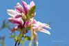 magnolia (photos4dreams) Tags: gersprenz münster hessen germany naturschutz nabu naturschutzgebiet photos4dreams p4d photos4dreamz nature river bach flus natur pur