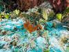 Seahorse (R. Donald Winship Photography) Tags: aquaticlife cozumel divingunderwater linedseahorse villablancareef