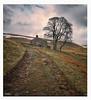 Homeward Bound...Spring day !! (Stu115) Tags: peak farm outdoor cheshire tree landscape fields walk track