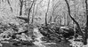 (adamwilliams4405) Tags: winter snow snowday snowy nature virginia visitrichmond visitvirginia loveva scenic landscapes canon va explore richmond rva richmondva tones trees icy outside river blackandwhite bnw bandw
