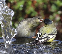 Romance by the fountain