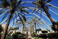 palme (IVAN 63) Tags: valencia spain spagna travel city europe landscapes lacittàdelleartiedellescienze ciutat de les arts ilesciències ciutatdelesartsilesciències cityofartsandsciences