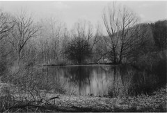Pond Reflections (neukomment) Tags: bw blackwhite film 35mm hpenvy5530scanner canonsureshot85zoom michigan usa crahenvalleypark march 2018 ilfordhp5plus400bw ilford iso400