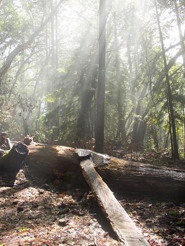 A wet log
