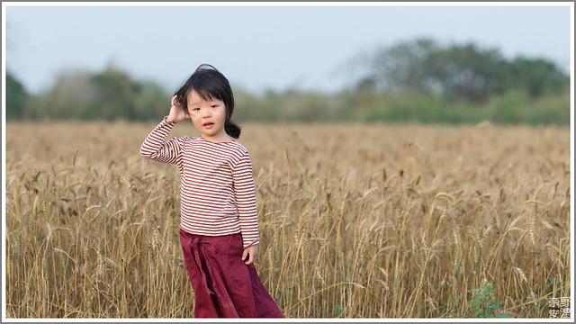 3月台南 親子寫真可以這樣拍 木棉花 蜀葵 小麥 一次讓你拍個夠 (23)