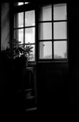 Vent coulis (Rachelnazou) Tags: caffenol minolta blackwhite film fomapan analog argentique