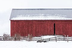 Amish Barn in Central Michigan (Lee Rentz) Tags: amish april canadianlakes oldorderamish agrarian agricultural agriculture america barn barndoor centralmichigan crops devout farm farmer farming farmstead farmyard fence gray horizontal landscape lifestyle lowerpeninsula metalroof michigan northamerica old pastoral picturesque pious red rural rustic simple simpleliving sky snow snowcovered snowflakes snowing snowy stanwood tradition traditional usa venerable winter wood wooden