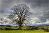 Lindenbaum (Hanspeter Ryser) Tags: lindenbaum willisau gewitterstimmung centralschweiz schweiz switzerland baum hügel wolken hergiswil
