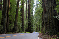 Avenue of the Giants, California (Jolita Kievišienė) Tags: california america united states avenue giants scenic highway northern humboldt redwoods state park tree forest road