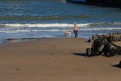 DSC05099 (LezFoto) Tags: sonydigitalcompactcamera rx100iii rx100m3 sony dscrx100m3 cybershot sonyimaging sonyrx100m3 compactcamera pointandshoot torrybattery beachaberdeen scotland unitedkingdom dog dogwalker