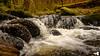 The Inchewan Burn (grahamrobb888) Tags: nikon nikond800 nikkor d800 inchewanburn water waterfall waterspray peatywater peaceful perthshire scotland birnamwood