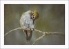 Preening (Krasne oci) Tags: hummingbird bird hummer wildlife nature outdoors evabartos texturedphoto painterly artphotography photoart