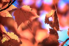 IMG_3791_Smoky Mountinas (Alex Hsieh (椰子人)) Tags: ç´è² smokymountains smokymountainsnationalpark nationalpark greatsmokymountains travel roadtrip 2016 fall fallfoliage autumn foliage canon canon6d usa tennessee tn northcarolina