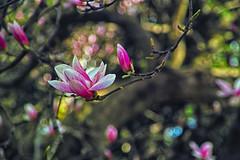 In blossom (Matjaž Skrinar) Tags: 250v10f