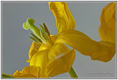 Flowers - The Beautiful Design of Nature. (Bill E2011) Tags: nature colour beauty design canon delicate pattern patterns impressive