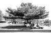 Resting station (Gabby Canonizado 02 (New account)) Tags: nairobi kenya nairobikenya crocodilefarm gabbycanonizado nikon nikond7000 d7000