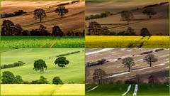 Four Seasons (Peter Quinn1) Tags: collage montage whiston guilthwaite guilthwaitecommonlane rotherham southyorkshire farmland agriculture seasons fourseasons ayearinthelife lightandshadow