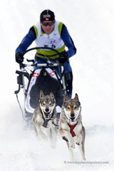 Sled dog race (My Planet Experience) Tags: siberian husky huskies alaskan team dog animal nordic sled snow speed race racing running musher mushing pulka pulk sledge sleigh white winter alaska yukon siberia myplanetexperience wwwmyplanetexperiencecom