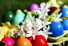 Happy Easter! (Nathalie_Désirée) Tags: egg easter colors spring flower eggs eggcarton hyacinth green blue aquamarine pink violet yellow red orange carmine whiteflower sunshine sunlight outdoors plant customs tradition celebration colorful happy harmony harmonisiac