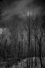 dark day in the sticks (sami kuosmanen) Tags: kuusankoski kouvola finland suomi dark taivas tree talvi tumma trees luonto light landscape long europe exposure expression emotion eerie forest sky photography puu pitkä pilvi valo valotus creative clouds